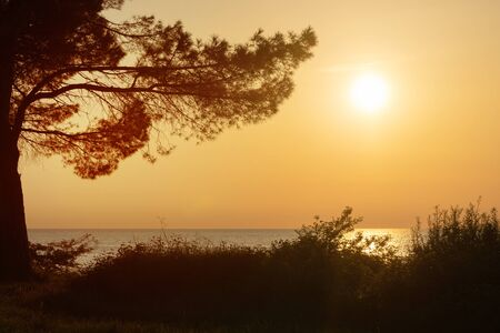 Silhouette of pine tree and sun setting over sea with bright and clear orange sky in background. Vacation, coast and optimism concepts. Stock fotó