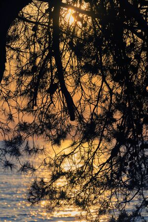 Silhouette of pine tree branches and sun setting over Adriatic sea in golden sky background. Vacation, tourism, nature and optimism concepts.