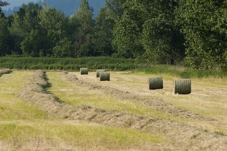 Field with mowed hay and bales in the countryside on a sunny day. Agriculture, farming and sustainability concepts