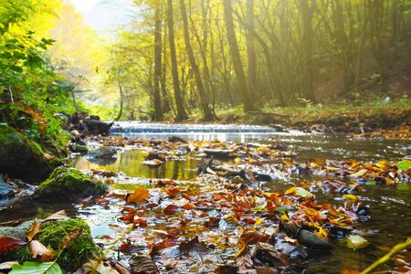 Beautiful stream in autumn forest with radiant sunlight in background. Nature backgrounds, seasons, environment and ecology concepts.