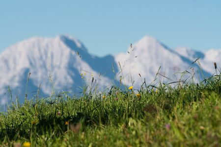 Edge of an early autumn meadow and beautiful alpine peaks in background in Slovenia