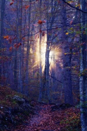 Sunlight shining through mist in a fantasy-like dreamy mystical autumn forest. Beauty in nature, forestry and hope concepts 版權商用圖片