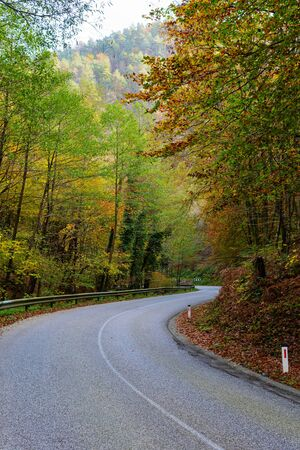 Empty tarmac road winding through a beautiful autumn colored forest. Travel, traffic and nature concepts.