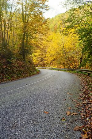 Winding empty asphalt road with guardrails running through beautiful autumn colored forest. Travel, traffic and nature concepts.