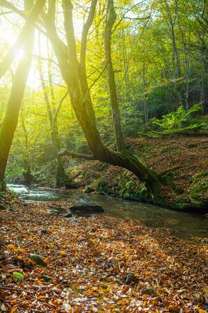 Beautiful stream of fresh water in autumn forest and old overhanging tree with radiant sunlight in background. Nature backgrounds, seasons, environment and ecology concepts.