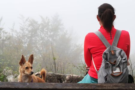 Female hiker sitting on bench with her dog and looking into foggy distance. Hiking, pets, animal friends, self-reflection and dog obedience training concepts. 版權商用圖片