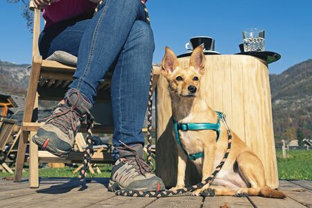 Watchful dog sitting next to a woman wearing jeans and hiking shoes having a coffee break in the sun. Pets, obedience training and relaxation concepts