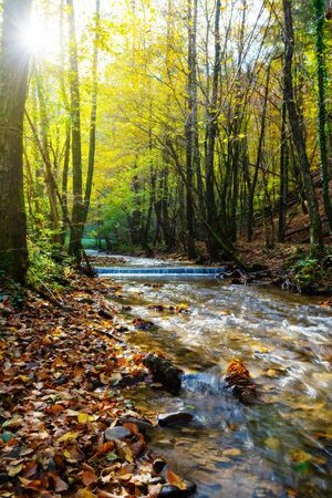 Beautiful stream in autumn forest with radiant sunlight shining through tree branches. Nature backgrounds, seasons, environment and ecology concepts.