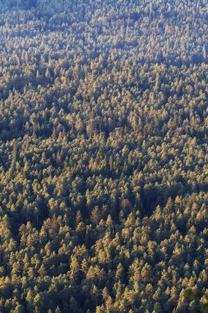 Aerial view of coniferous forest during golden hour. Forestry, agriculture, natural resources, environment and sustainability concepts