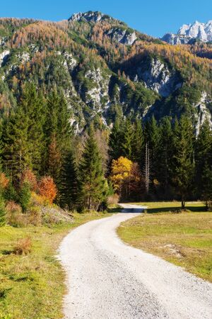 Winding gravel trail through alpine forest with vibrantly colored trees and mountains in background on a sunny autumn day
