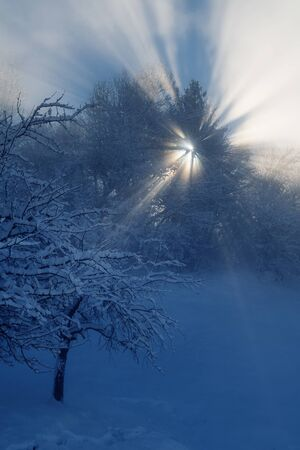 Detail of snow covered slope at the edge of forest with sun shining through tree branches on a winter morning. Weather, seasons and natural phenomena