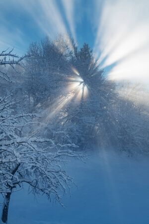 Detail of beautiful winter landscape with sun shining through tree branches on a winter morning. Weather, seasons and natural phenomena.