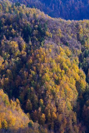 Aerial view of sunlit slopes of beautiful mixed forest in vibrant colors of autumn. Forestry, nature and seasons concepts