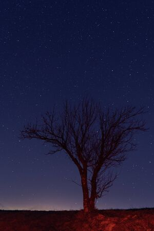 Lone naked tree against starry night sky. Astronomy, universe and nature concepts