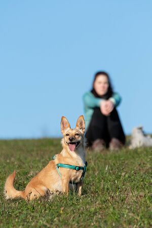 Cute light brown dog observing the surroundings, woman owner sitting on a grassy meadow ground in background. Hiking, pets, love and friendship concepts.