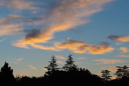 Beautiful sunset sky with orange sunlit clouds and silhouette of cedar treetops below. Weather, meteorology, magical nature and environment concepts.