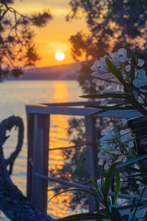 Romantic view of blossoming nerium oleander on terrace overlooking Adriatic sea in Croatia and beautiful sunset in background. Vacation, tourism, travel, summer and emotions concepts Foto de archivo