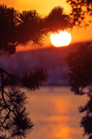 Silhouette of pine tree and beautiful sunset on Croatian coast of Adriatic sea in background. Vacation, tourism and optimism concepts.