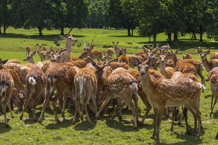 A herd of deer on the farm Imagens