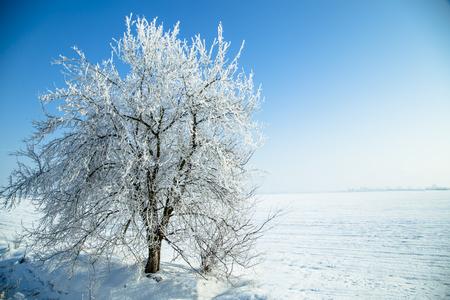 냉동 가지에 겨울 나무 스톡 콘텐츠
