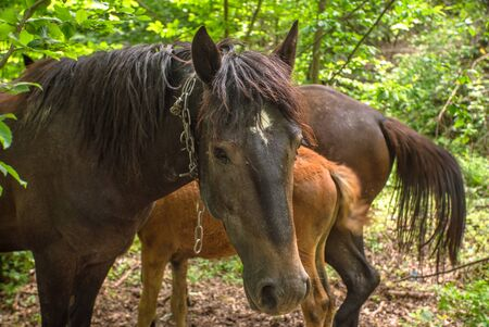 horses hid in the woods close up. pets.