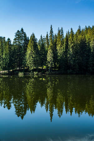 coniferous forest near the lake is reflected in the water. blue sky. Synevir Carpathians. Standard-Bild - 154750260