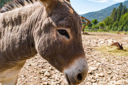 donkey close up. Pets.