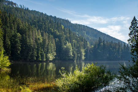 Coniferous forest near the lake background of mountains and blue sky with clouds. Synevir Carpathians.