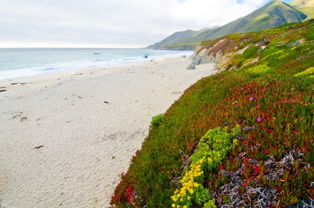 california beach: California SR1 is one of the most beautiful coastlines in the world
