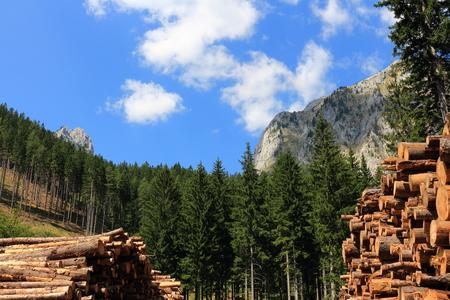 Tree trunks in the Austrian Alps photo