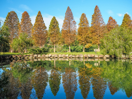 Reflection of maple forest in Beipu, Taiwan.