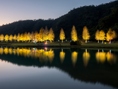 The night view of the bald cypress trees with stunning reflection in Yilan, Taiwan.