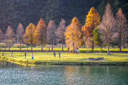 The bald cypress trees along Lipi Lake in Yilan, Taiwan. Stok Fotoğraf