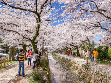 Kyoto, Japan - 4 Apr, 2017: Tourists are wandering on the Philosopher's Path and enjoying the scenery of the cherry blossoms. Редакционное