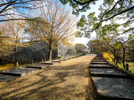 ginkgo trees in Japan. Stok Fotoğraf