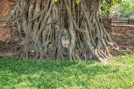 Buddha Head in Tree Roots at Wat Mahathat Temple in Ayutthaya City of Thailand.
