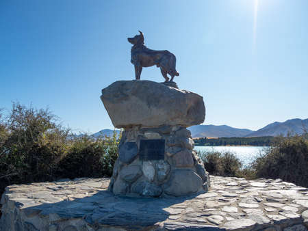 Tekapo, New Zealand - Feb 11, 2020: The sheepdog memorial is a well known bronze statue of a New Zealand Collie sheepdog close to the Church of the Good Shepherd.