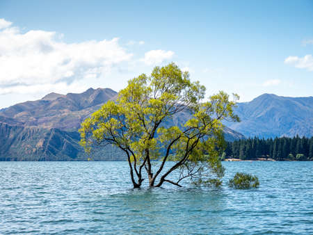 The Wanaka Tree, the most photographed trees in all New Zealand.