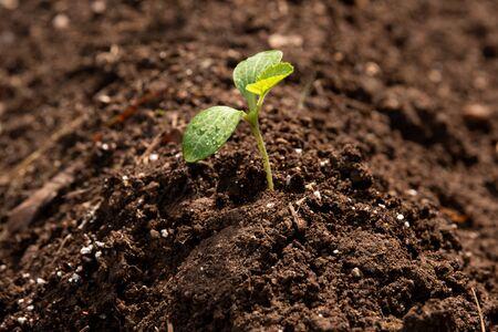 Crecimiento y protección del medio ambiente a la luz del cambio climático.
