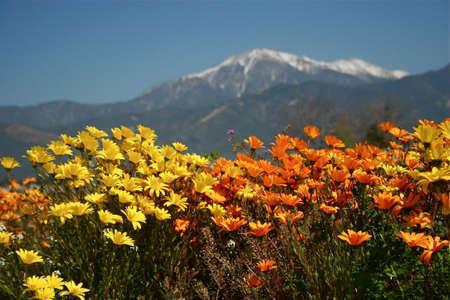 bernardino: Yucaipa Wildflowers