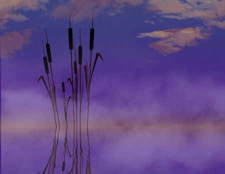 Cattails in water are the subject of this natural background image. Pond plants cat tails. This is an illustration. Stock Photo
