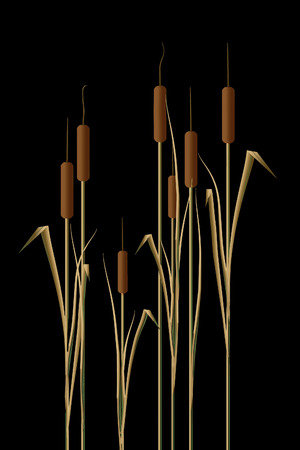 Cattails in water are the subject of this natural background image. Pond plants cat tails. This is an illustration. Reklamní fotografie