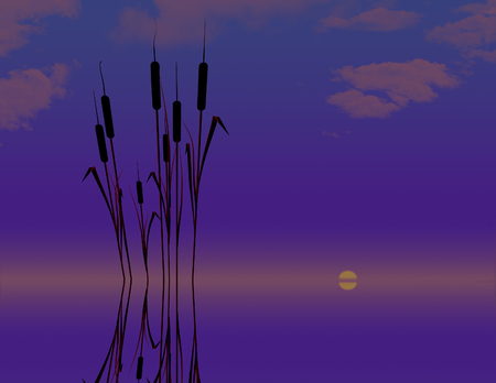 Cattails in water are the subject of this natural background image. Pond plants cat tails. This is an illustration. 写真素材