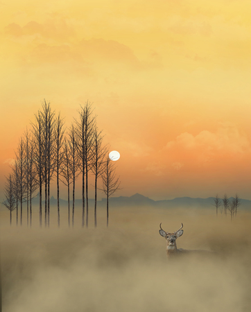 A golden sky, a whitetail deer, fog, trees and a sun near the horizon is in this dramatic scene of wildlife in a natural setting.  This is an illustration