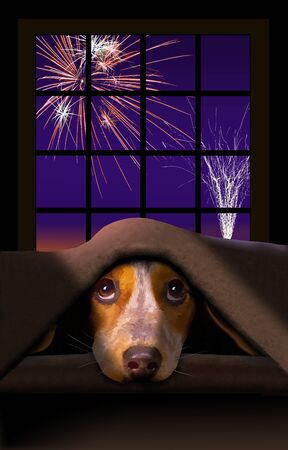 A cute little Beagle dog cowers under a blanket as fireworks explode outside the window behind him. Archivio Fotografico