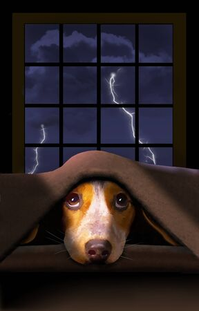 A cute little Beagle dog hides under a blanket as a thunderstorm rumbles outside the window behind him