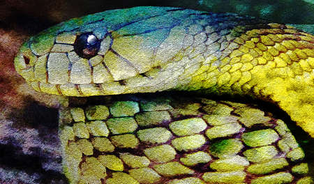 A western green mamba snake is seen in this graphic digitally filtered image. This is an illustration. 版權商用圖片