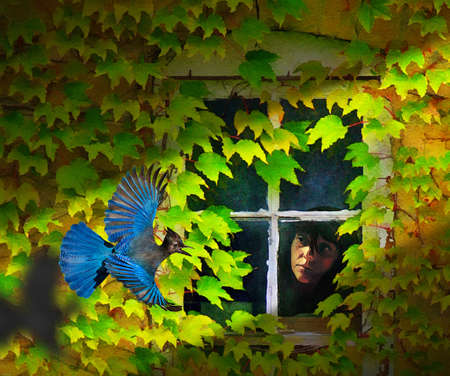 A girl looks out a vintage rustic ivy surrounded window as a blue stellar jay flies by. Stok Fotoğraf - 165955487