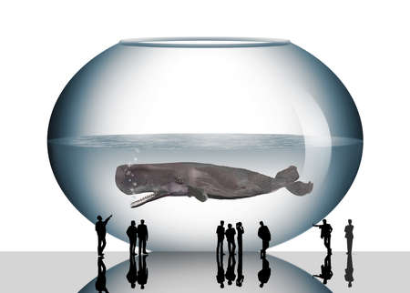 A sperm whale is seen in a fish bowl in this 3-D illustration about public aquariams. This is a 3-D illustration.