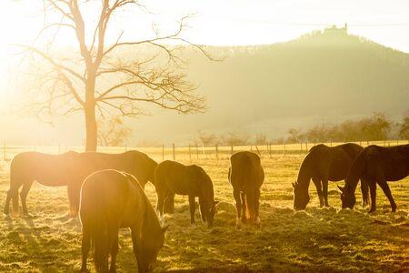 autumn horse: Horses in evening light